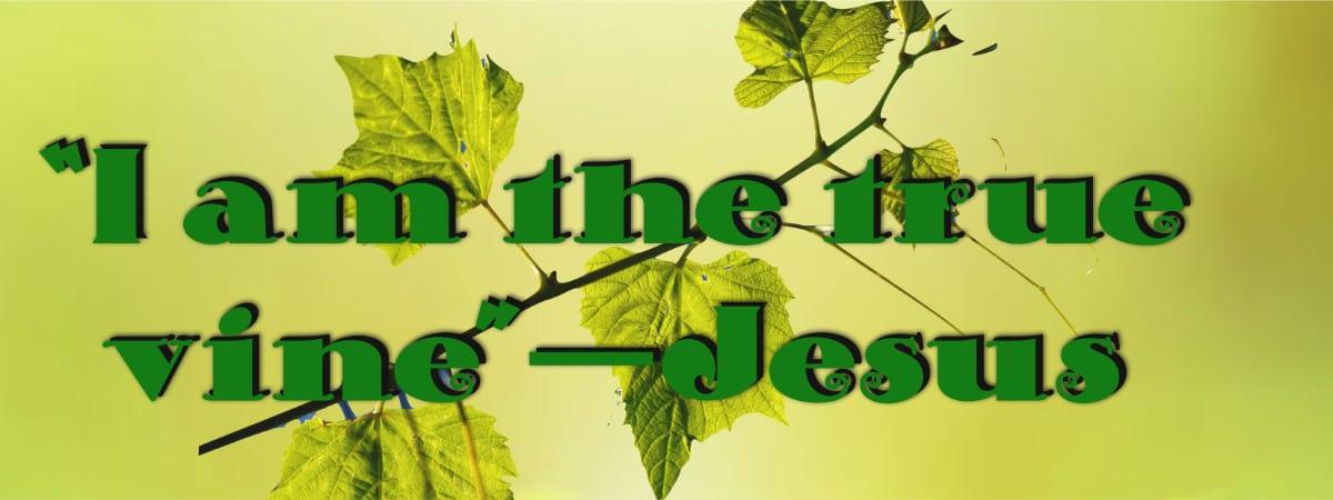 Jesus is the True Vine John 15:1