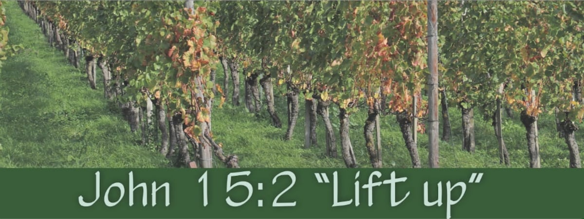 "John 15:2 A Defense of John 15:2's Translation of ""Lift up"" over ""Take away"" aero"